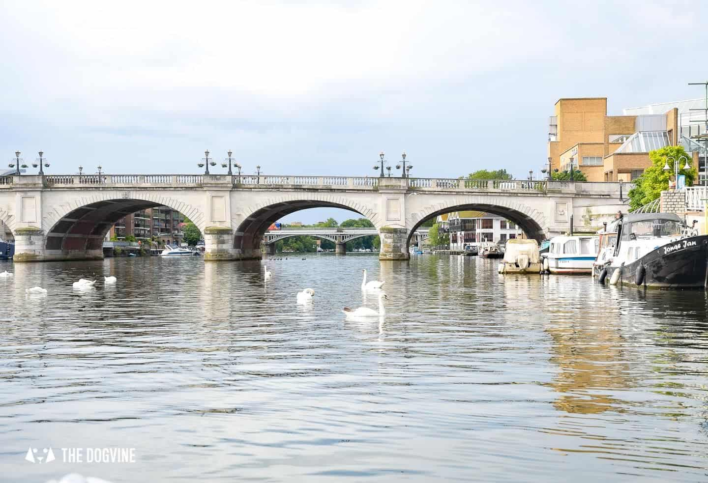 Dog-friendly Go Boat Kingston Upon Thames 25