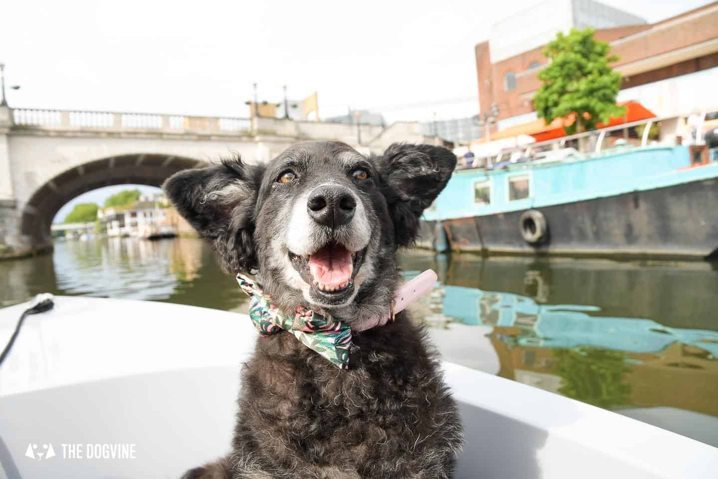 Dog-friendly Go Boat Kingston Upon Thames 26