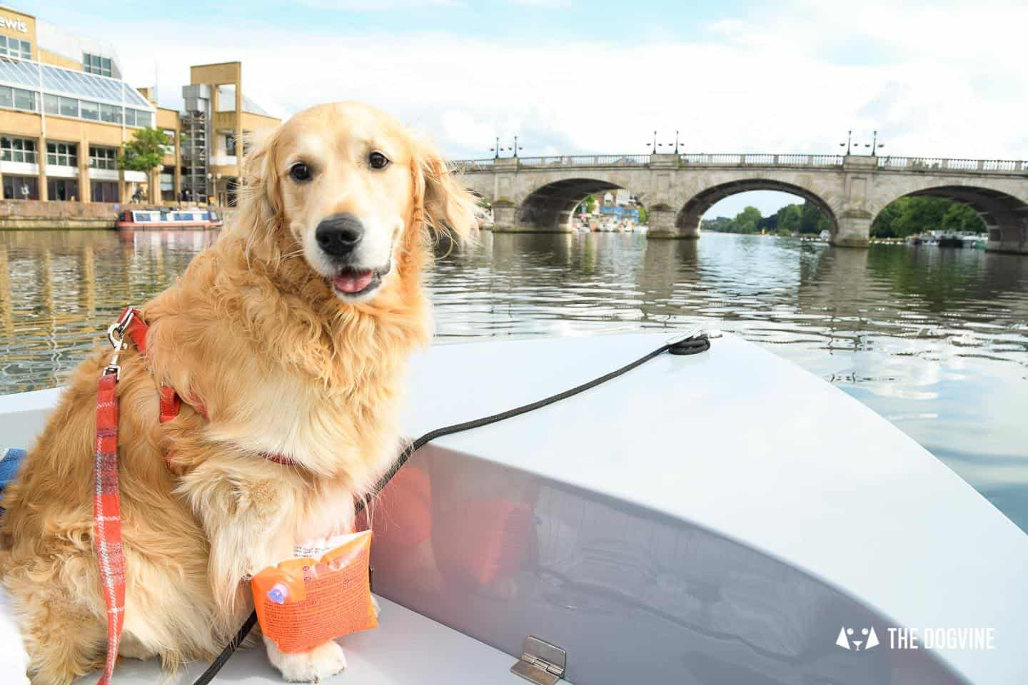 Dog-friendly Go Boat Kingston Upon Thames 27