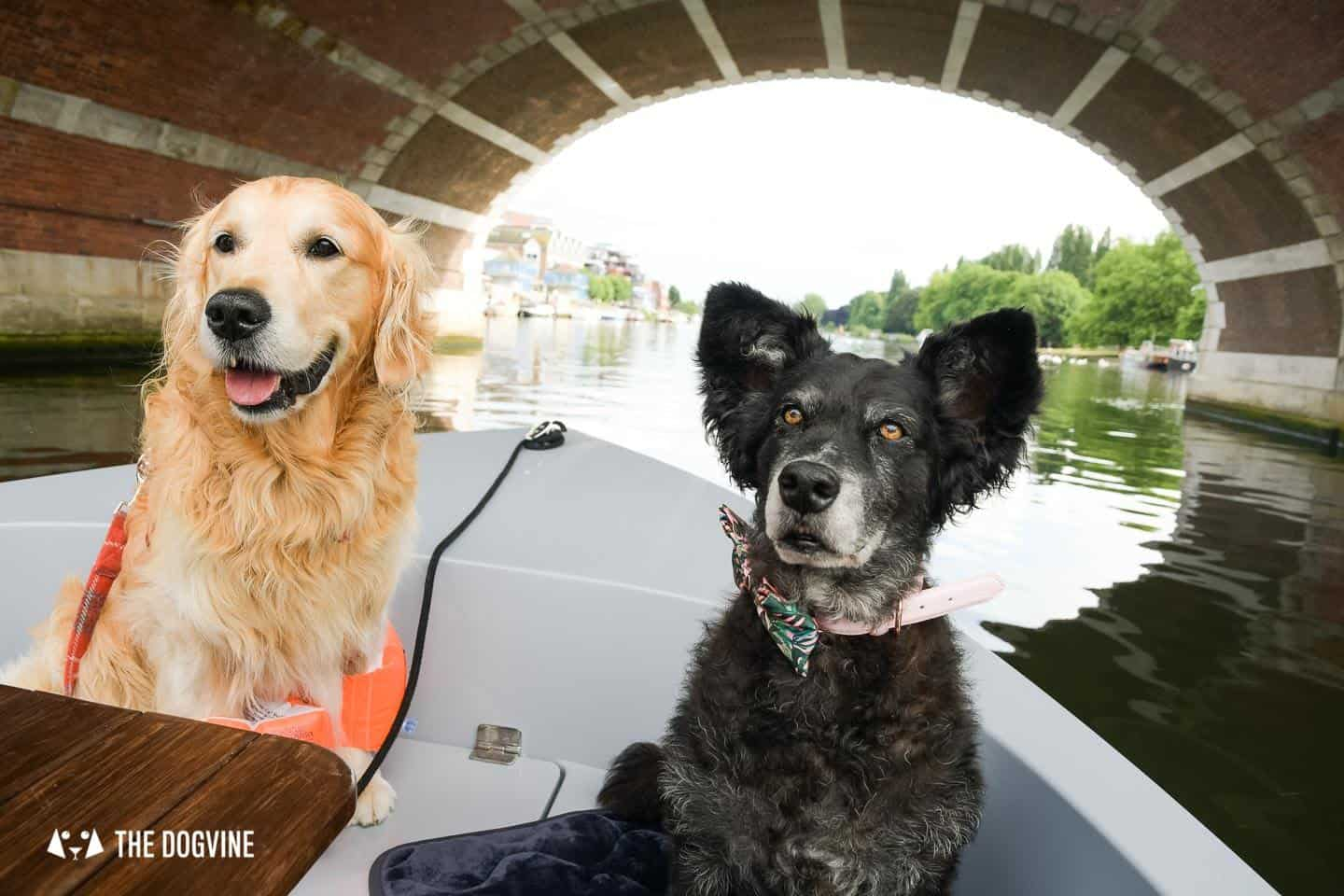 Dog-friendly Go Boat Kingston Upon Thames 28