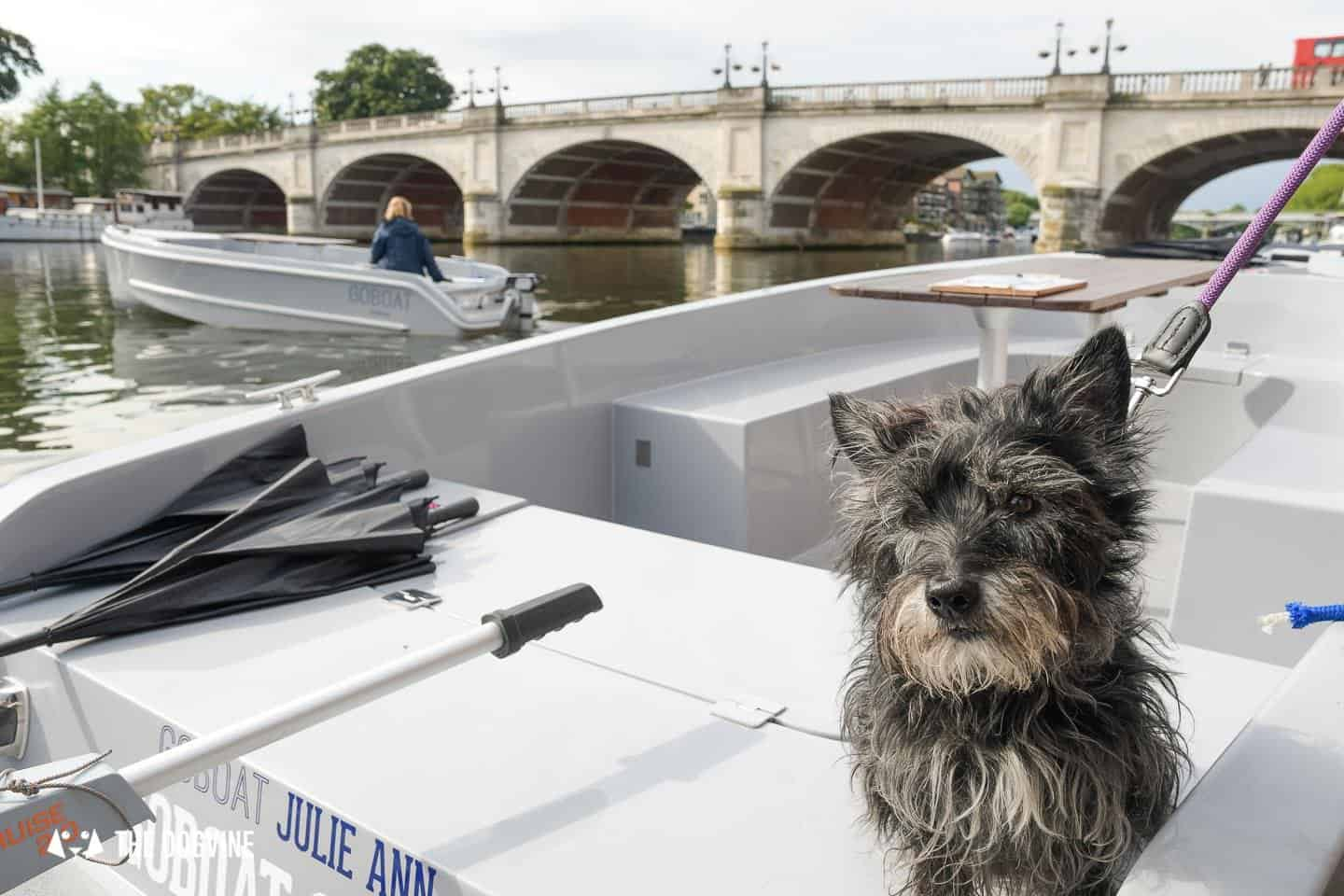 Dog-friendly Go Boat Kingston Upon Thames 29