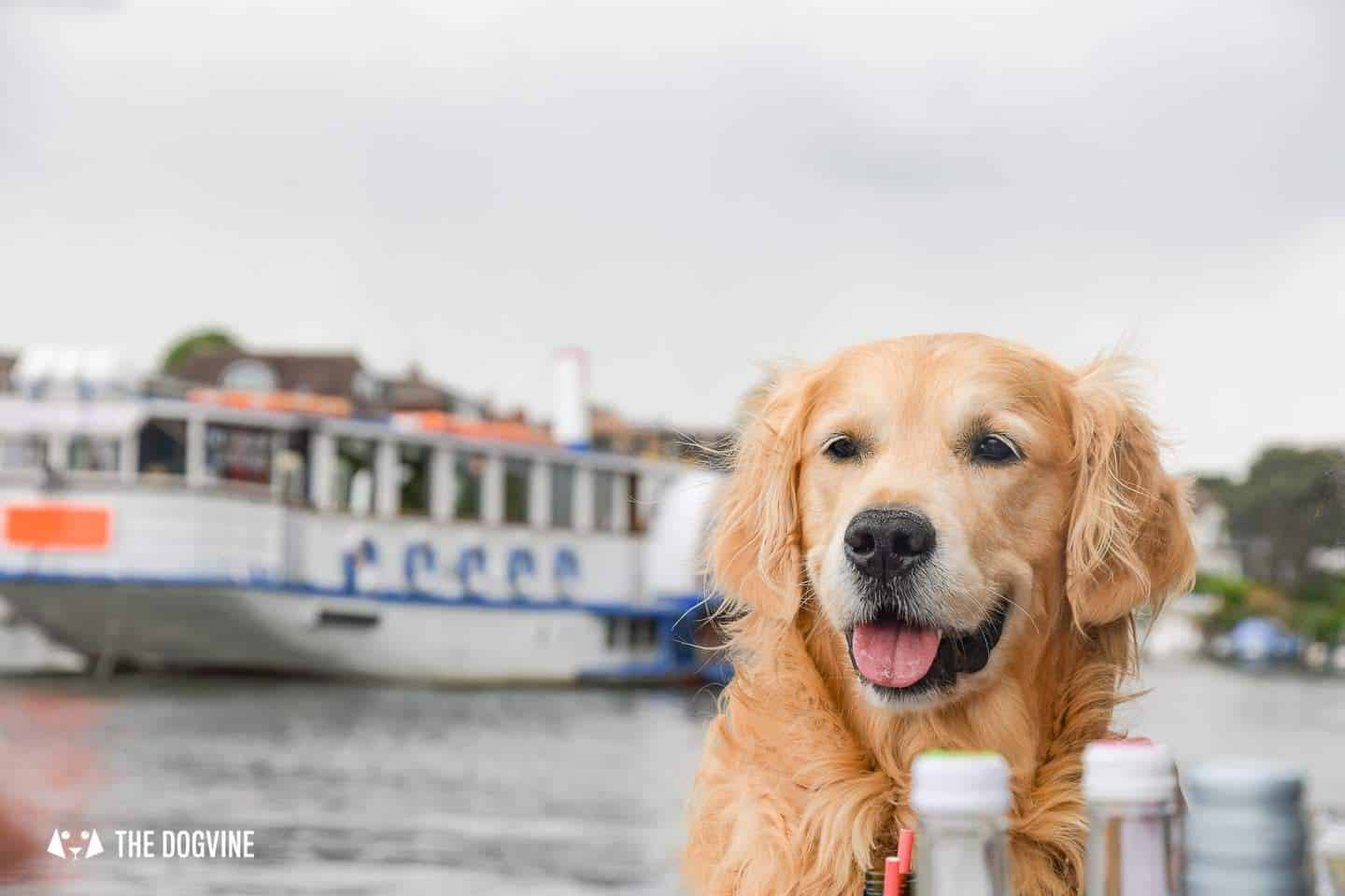 Dog-friendly Go Boat Kingston Upon Thames 3