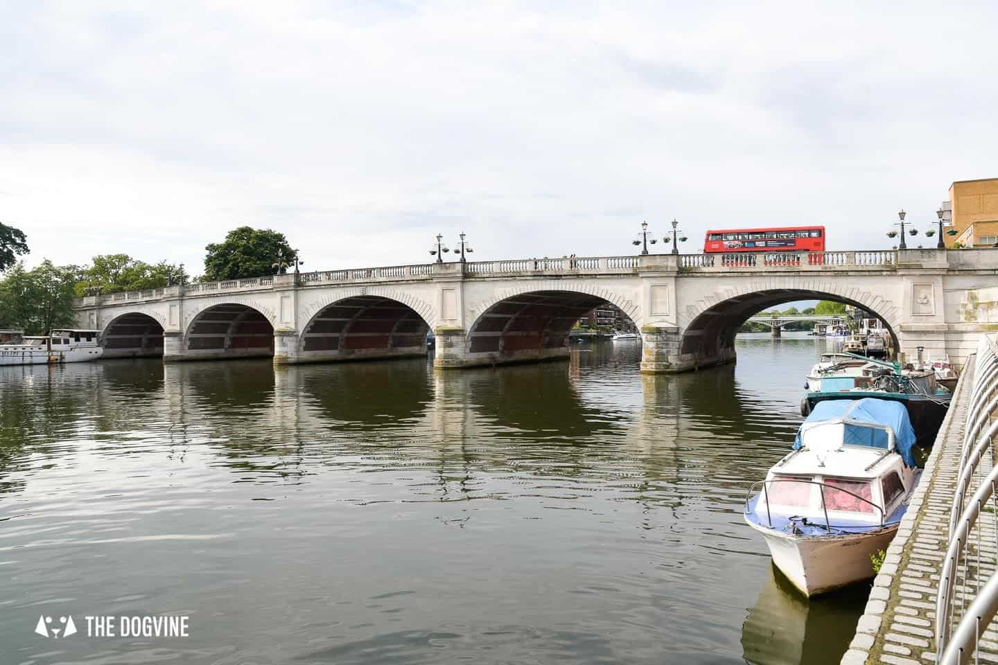 Dog-friendly Go Boat Kingston Upon Thames 30