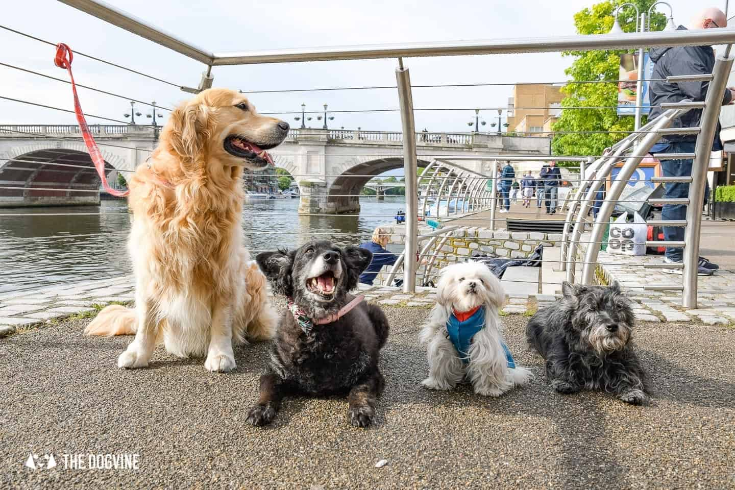 Dog-friendly Go Boat Kingston Upon Thames 31