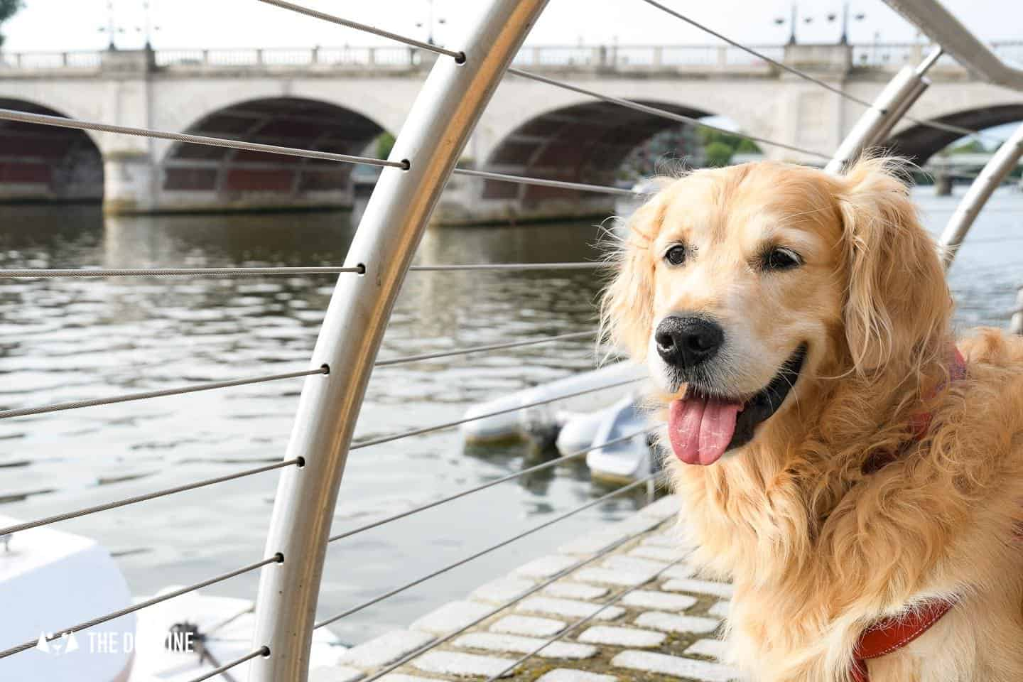 Dog-friendly Go Boat Kingston Upon Thames 33