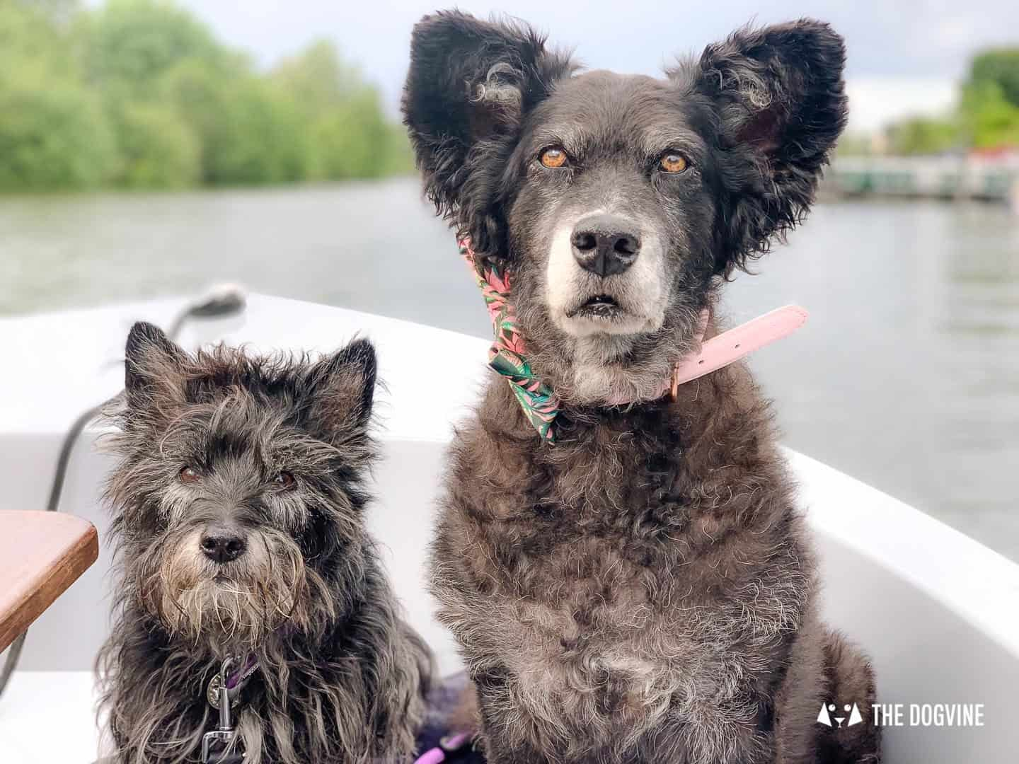 Dog-friendly Go Boat Kingston Upon Thames 50