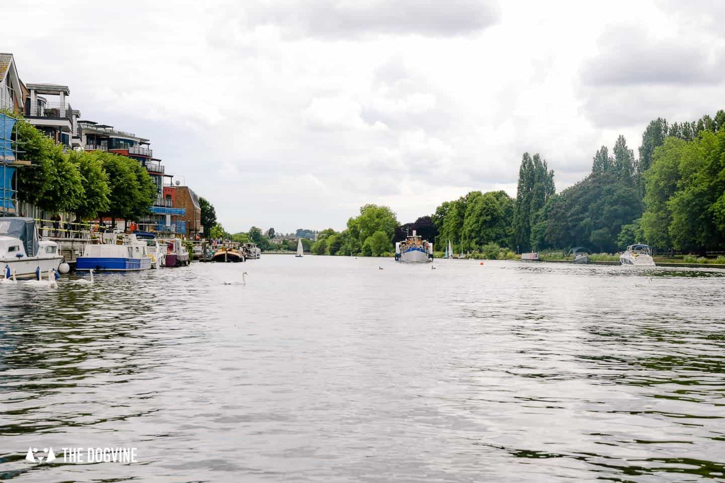 Dog-friendly Go Boat Kingston Upon Thames 54