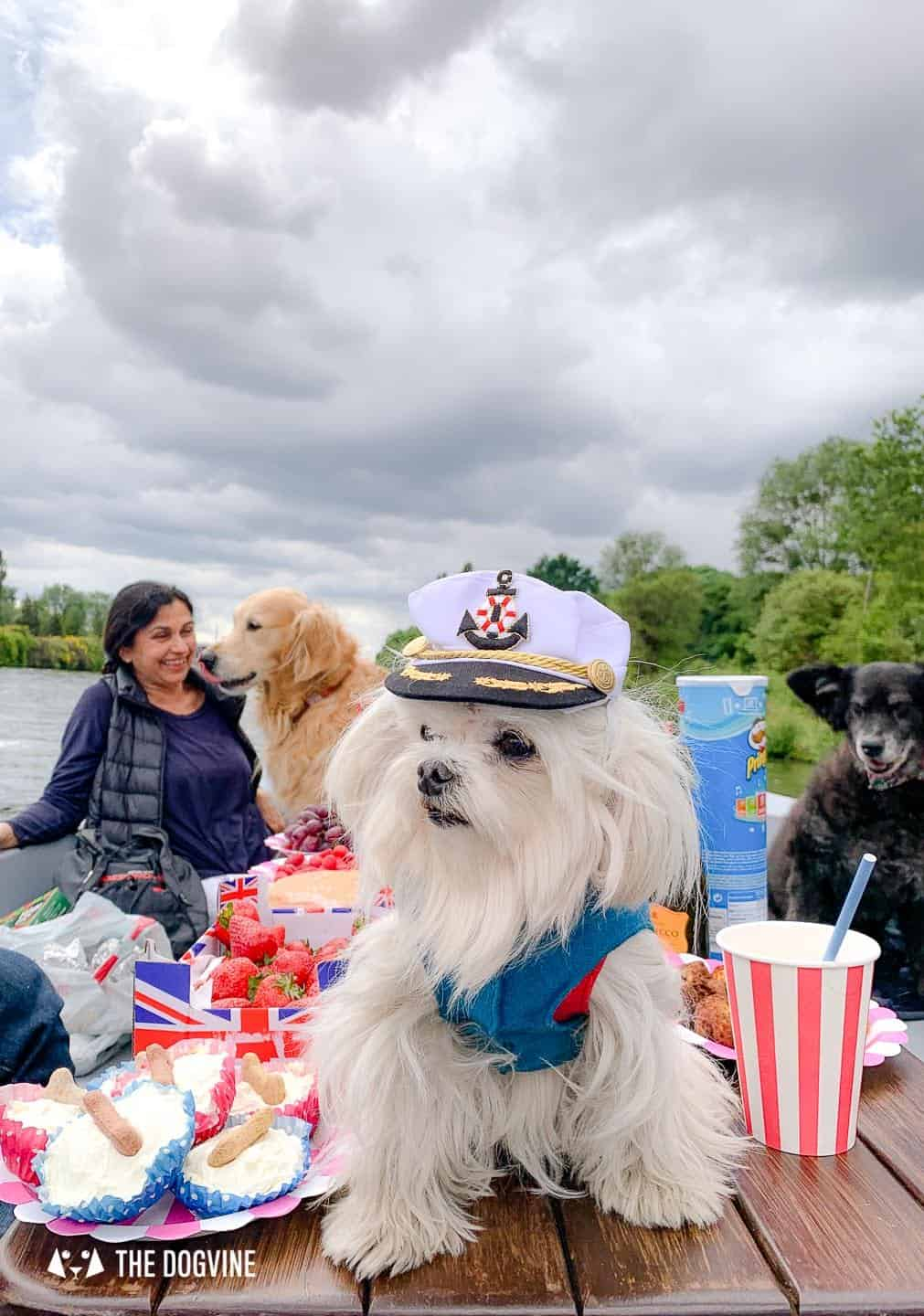 Dog-friendly Go Boat Kingston Upon Thames 55