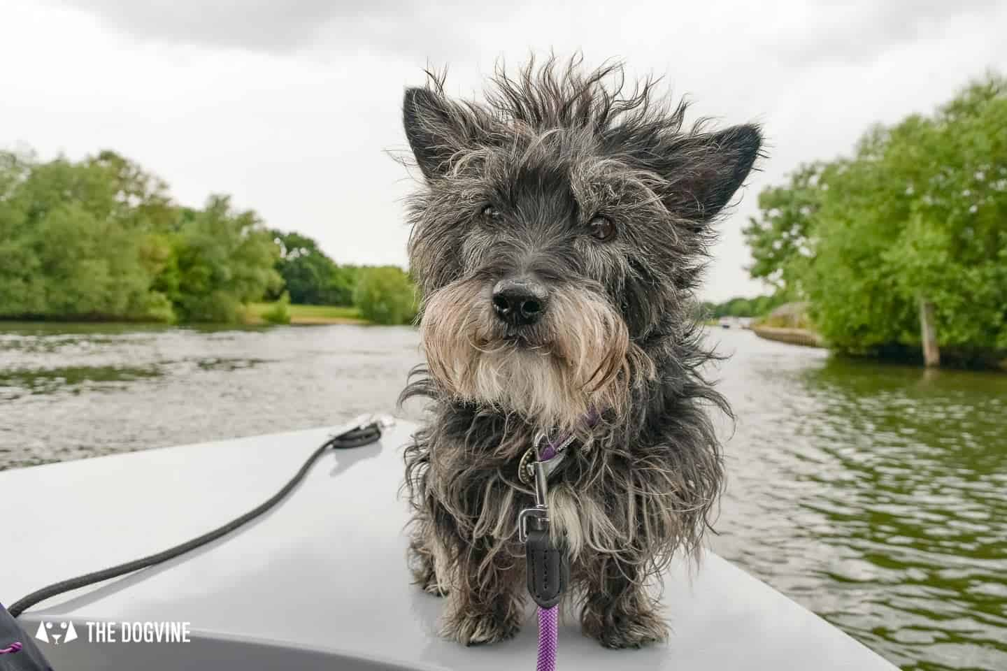 Dog-friendly Go Boat Kingston Upon Thames 9