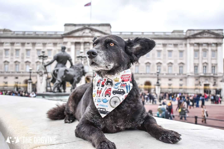 Dog-friendly London The Best Free Dog-friendly Things To Do - Buckingham Palace