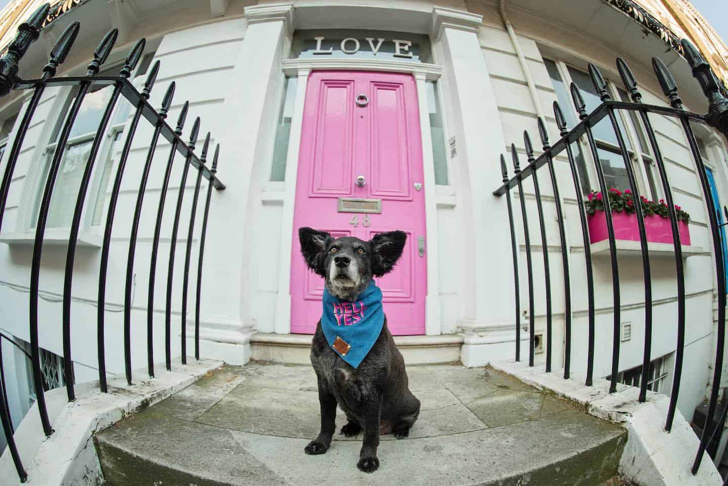 Dog-friendly London The Best Free Dog-friendly Things To Do - Chelsea 2