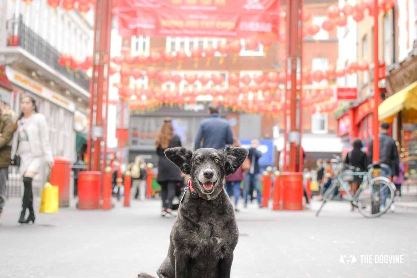 Dog-friendly London The Best Free Dog-friendly Things To Do - Chinatownjpg