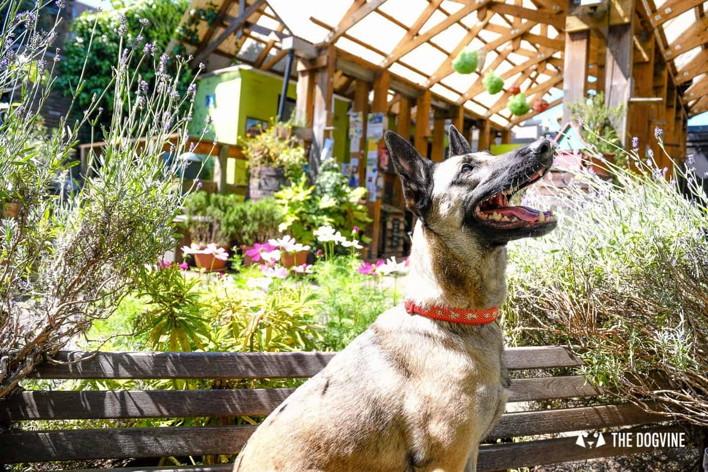Dog-friendly London The Best Free Dog-friendly Things To Do - Dalston Eastern Curve Garden 3