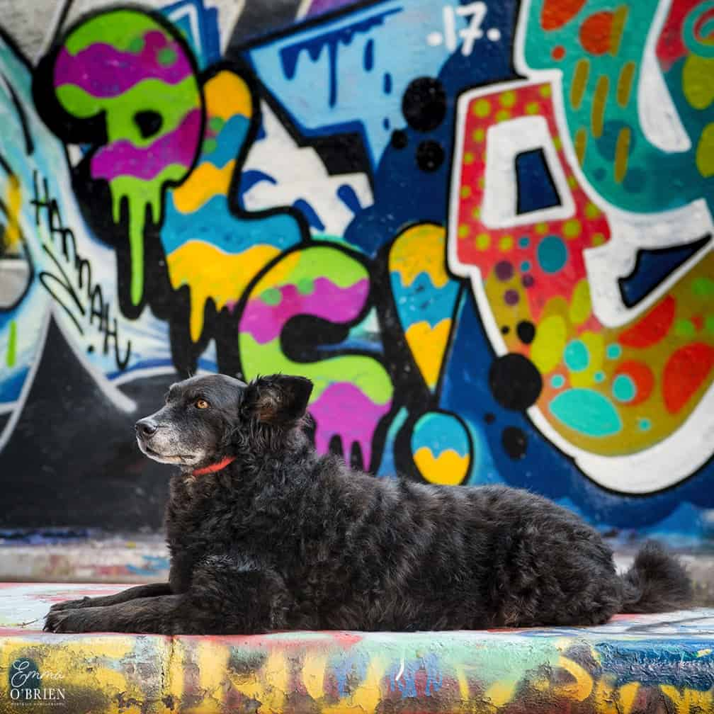 Dog-friendly London The Best Free Dog-friendly Things To Do - Leake Street Tunnel