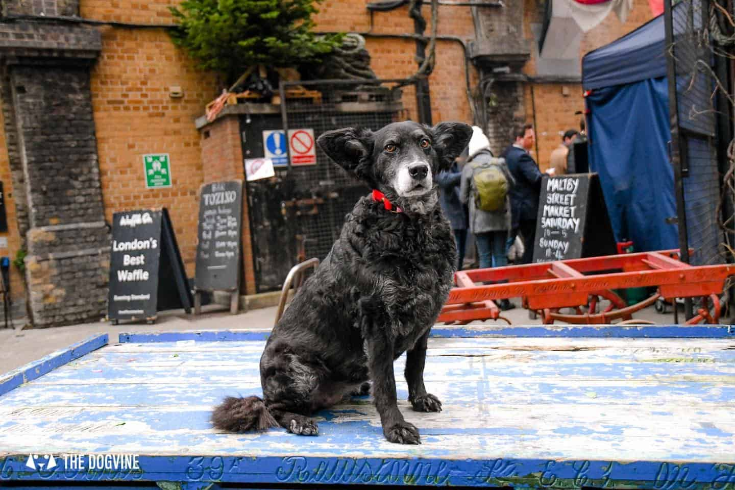 Dog-friendly London The Best Free Dog-friendly Things To Do - Maltby Street Market 1
