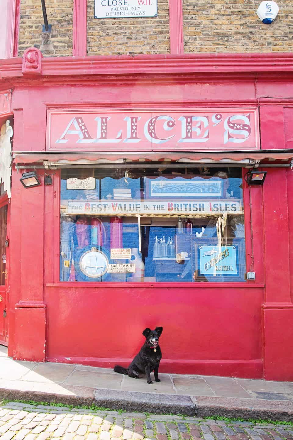 Dog-friendly London The Best Free Dog-friendly Things To Do - Notting Hill 3