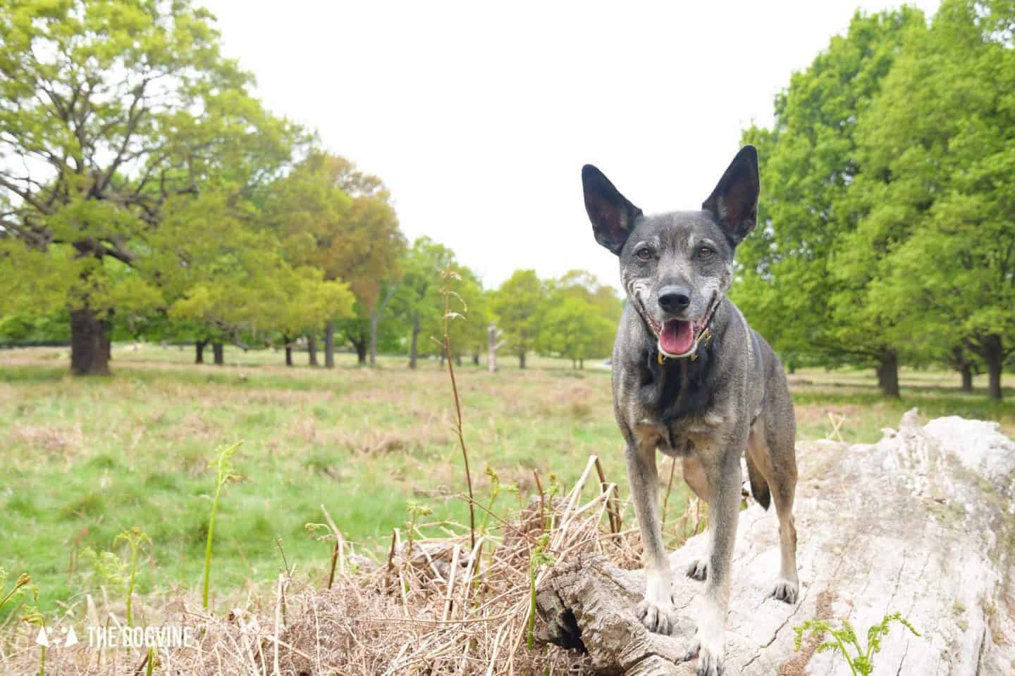 Dog-friendly London The Best Free Dog-friendly Things To Do - Richmond Park
