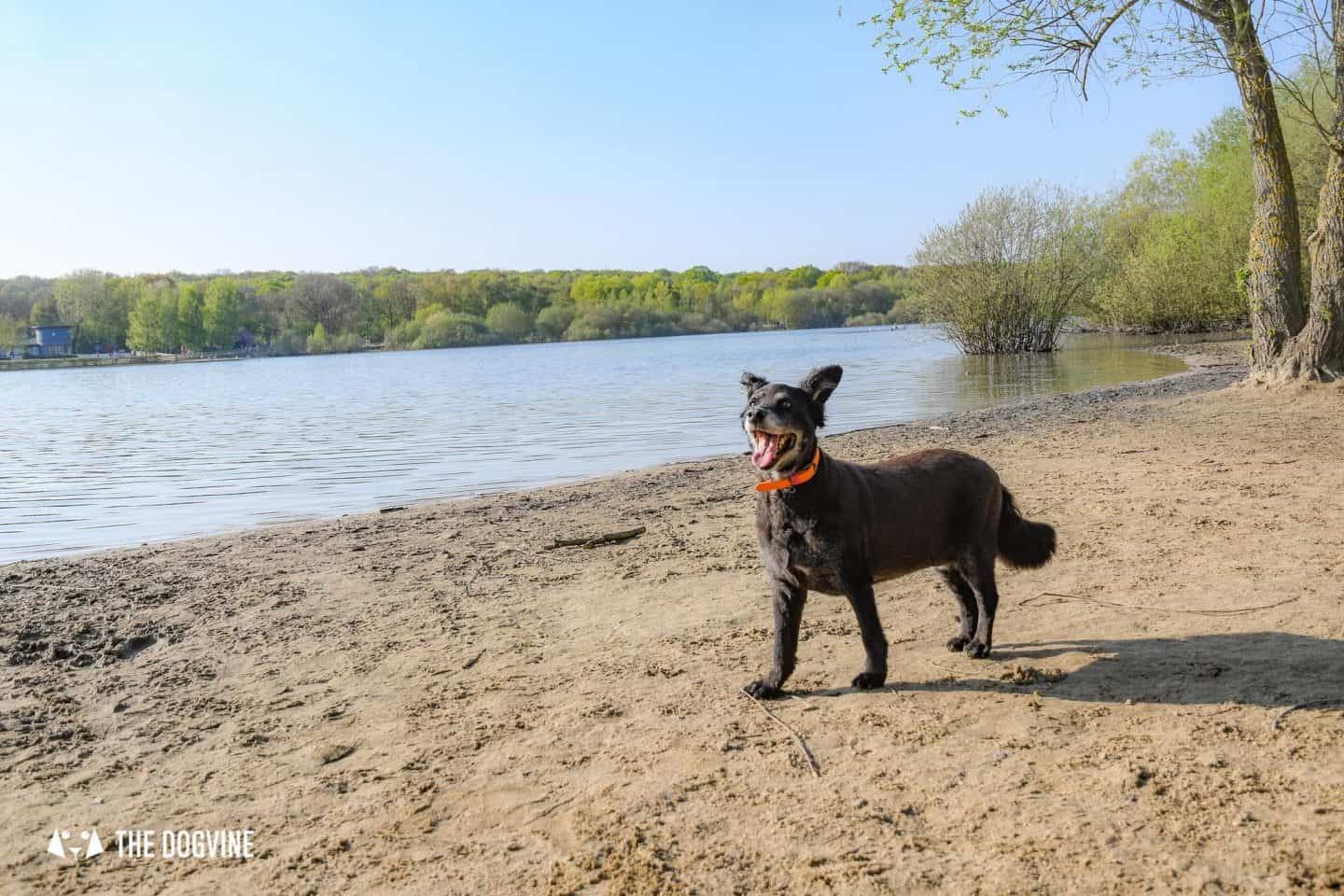Dog-friendly London The Best Free Dog-friendly Things To Do - Ruislip Dog Beach