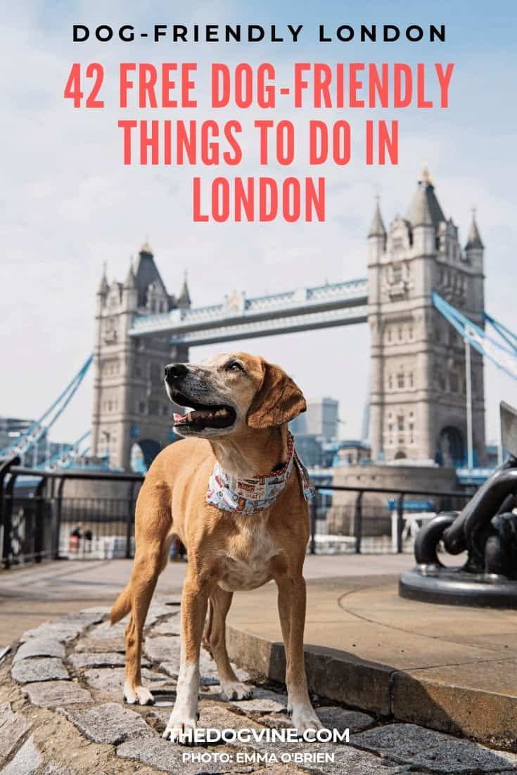 Dog-friendly London 42 Free Dog-friendly Things To Do In London