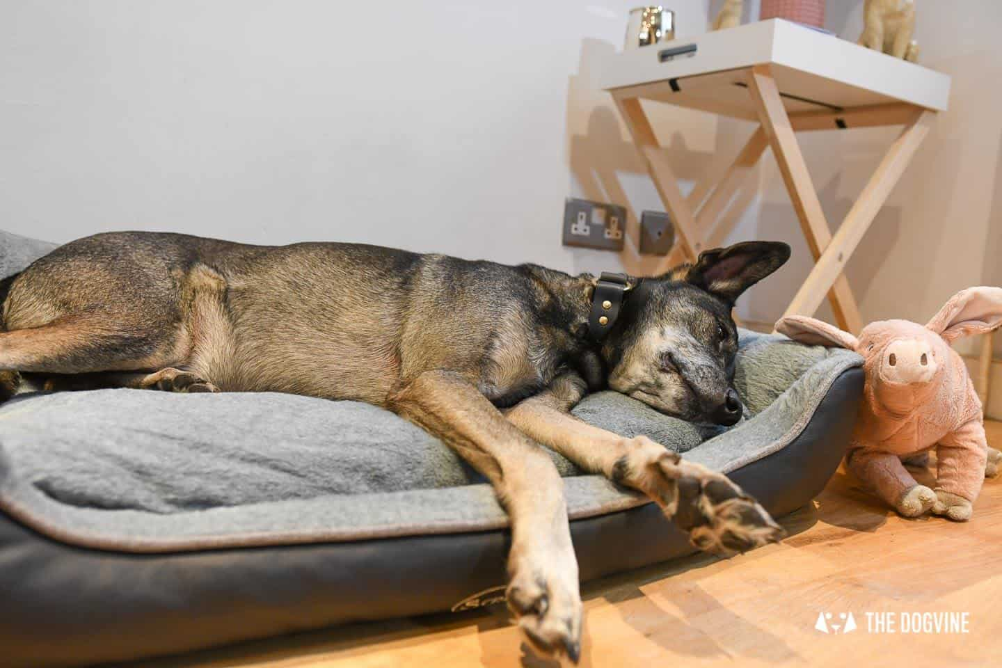 Paws Up For The Scruffs Orthopaedic Dog Bed - Chateau Box Bed Review 19