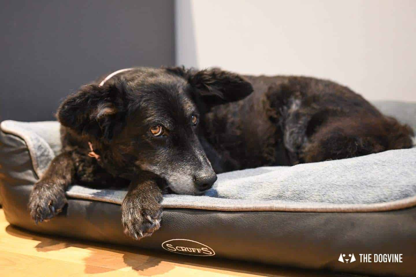 Paws Up For The Scruffs Orthopaedic Dog Bed - Chateau Box Bed Review 2