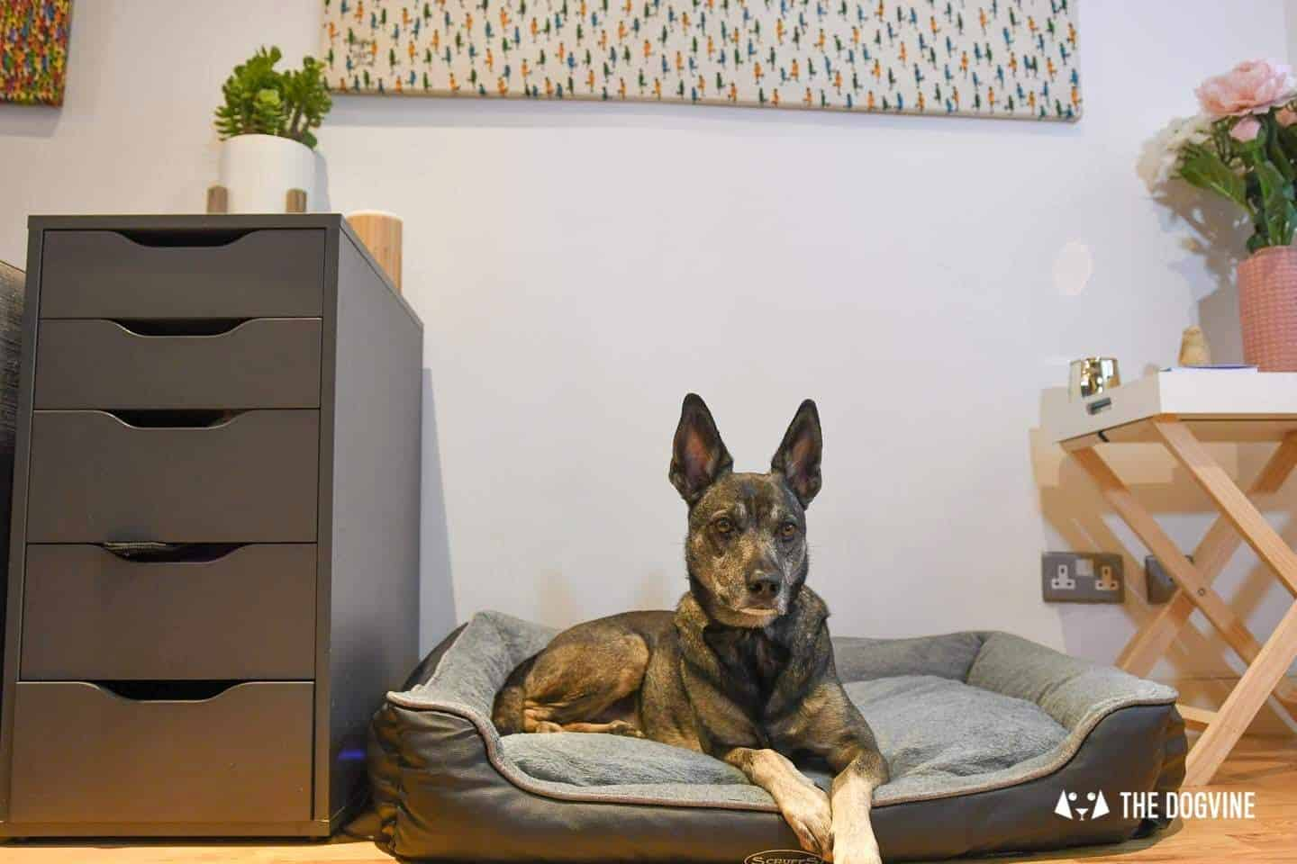 Paws Up For The Scruffs Orthopaedic Dog Bed - Chateau Box Bed Review 21