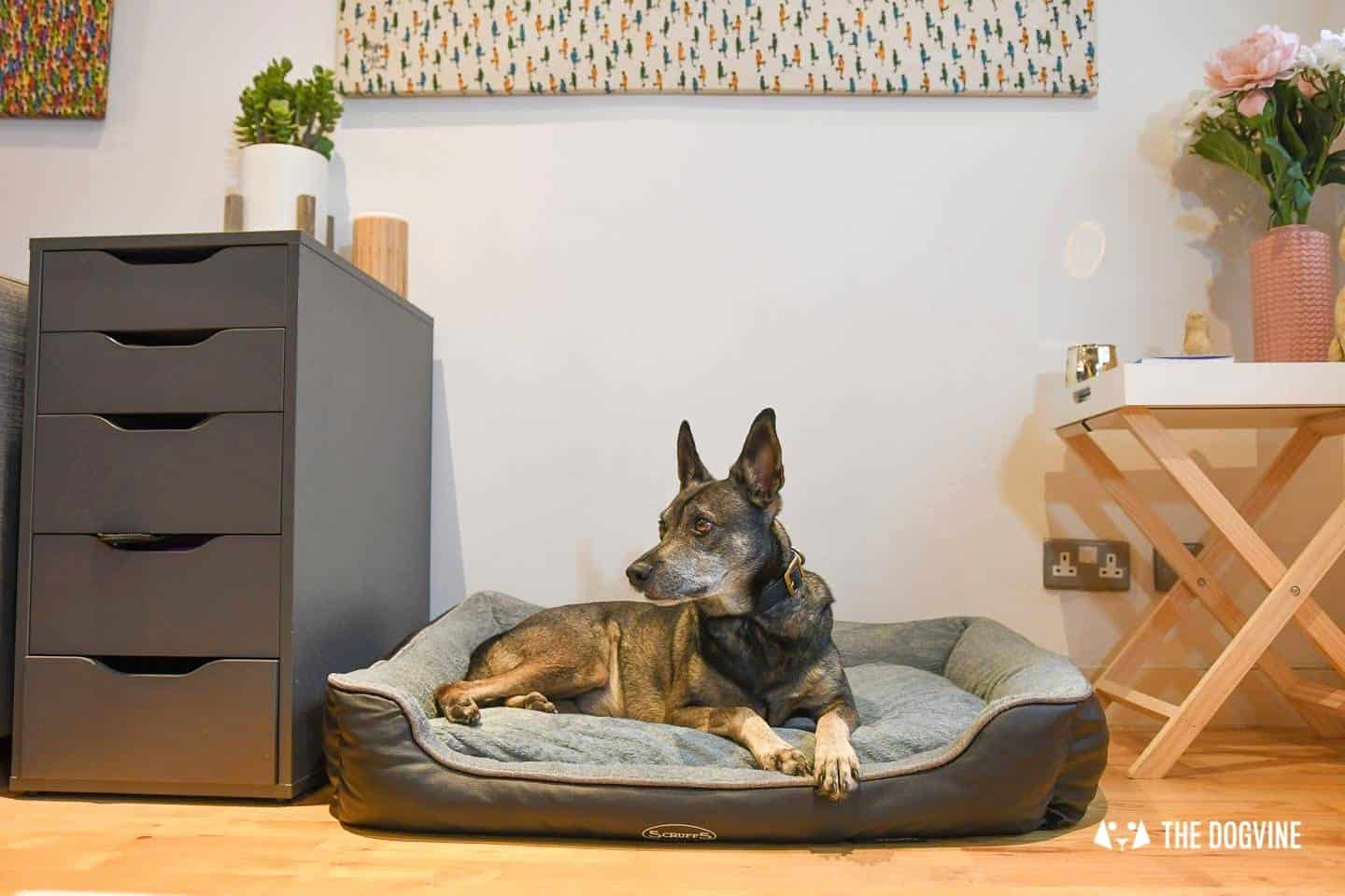 Paws Up For The Scruffs Orthopaedic Dog Bed - Chateau Box Bed Review 22
