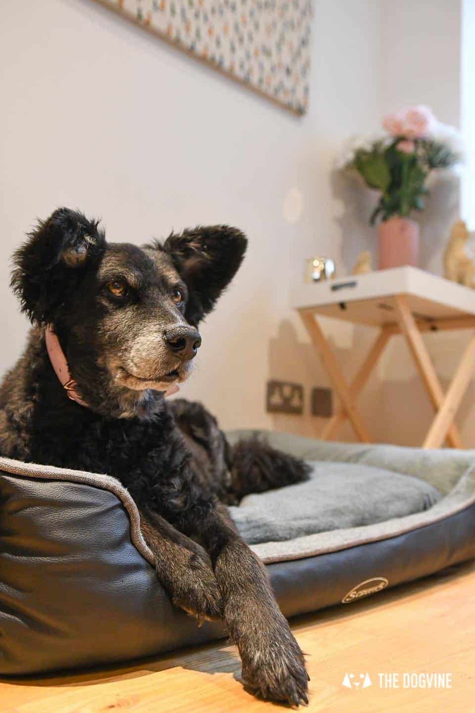 Paws Up For The Scruffs Orthopaedic Dog Bed - Chateau Box Bed Review 4
