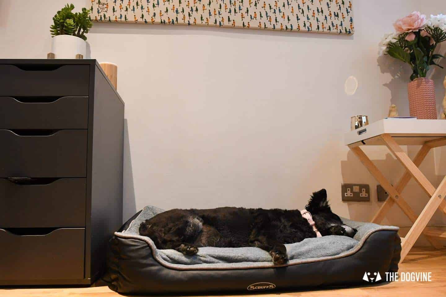 Paws Up For The Scruffs Orthopaedic Dog Bed - Chateau Box Bed Review 7