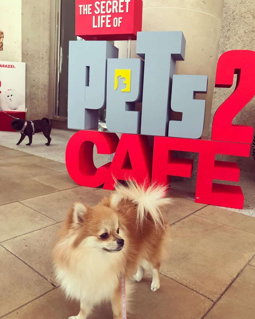 Pomeranian Pop-up Café London Review By Bear and Hannah - Secret Life of Pets