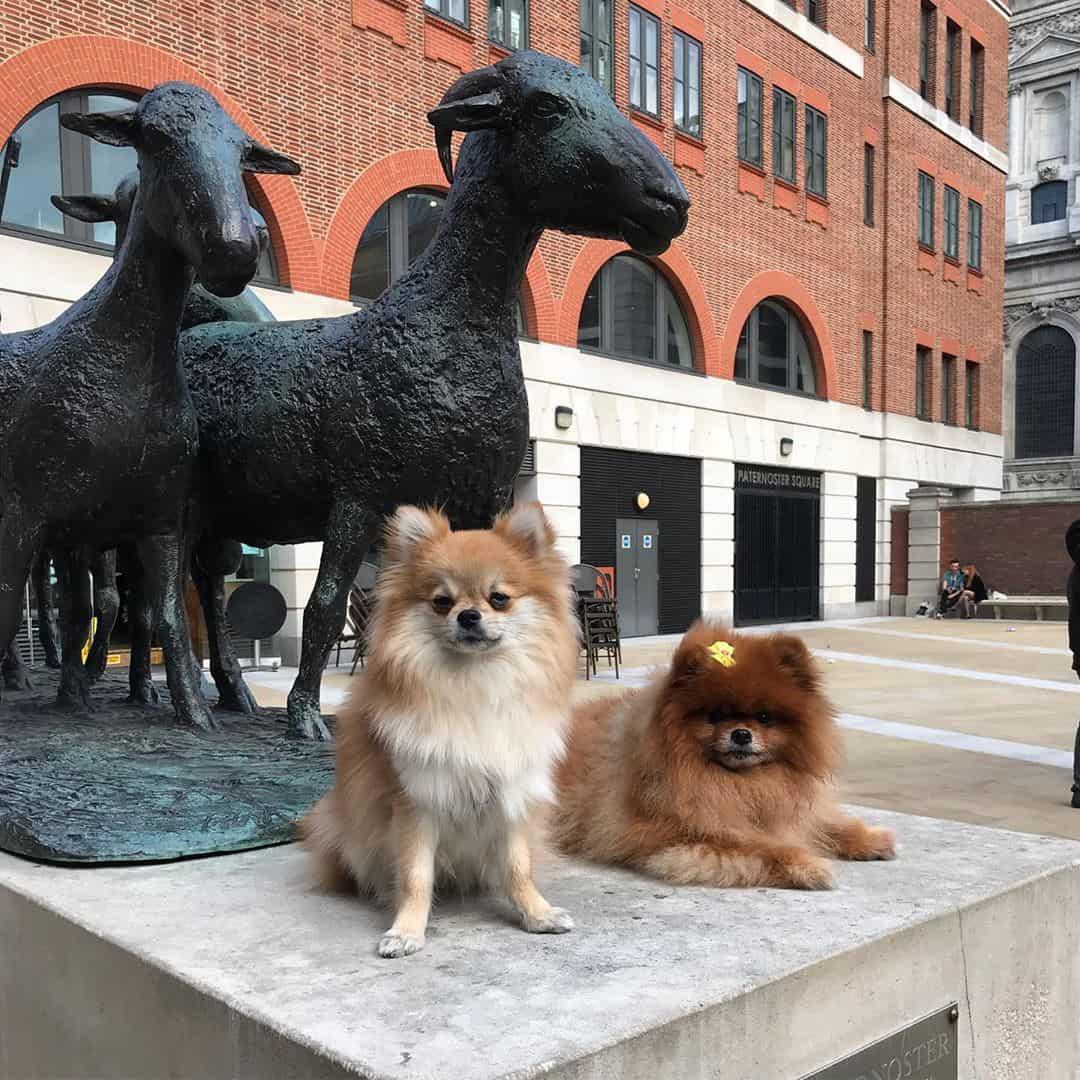 Pomeranian Pop-up Café London Review By Bear and Hannah - The Poms