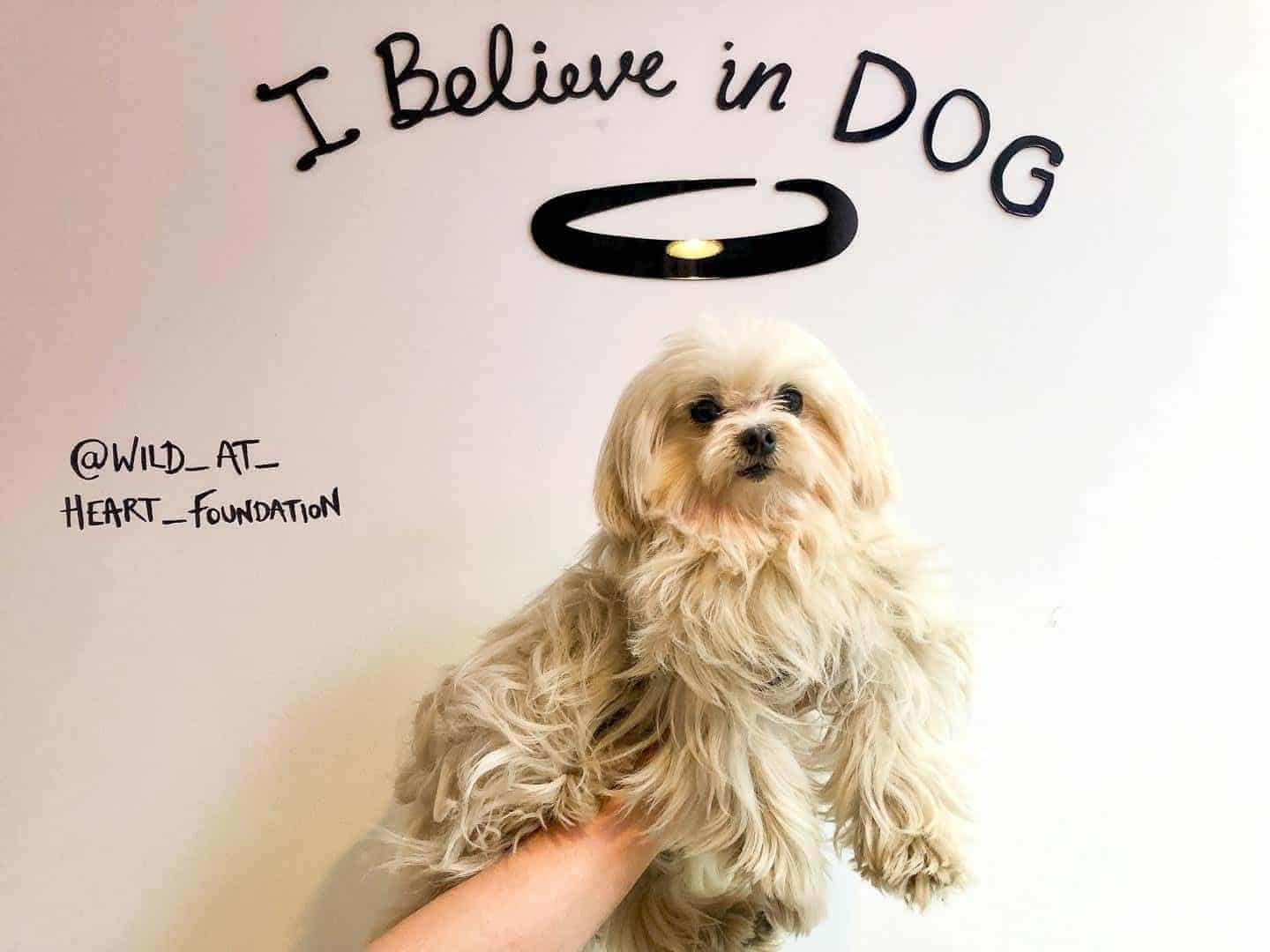 Pup Philanthropy at I Believe In Dog: The Pop-up