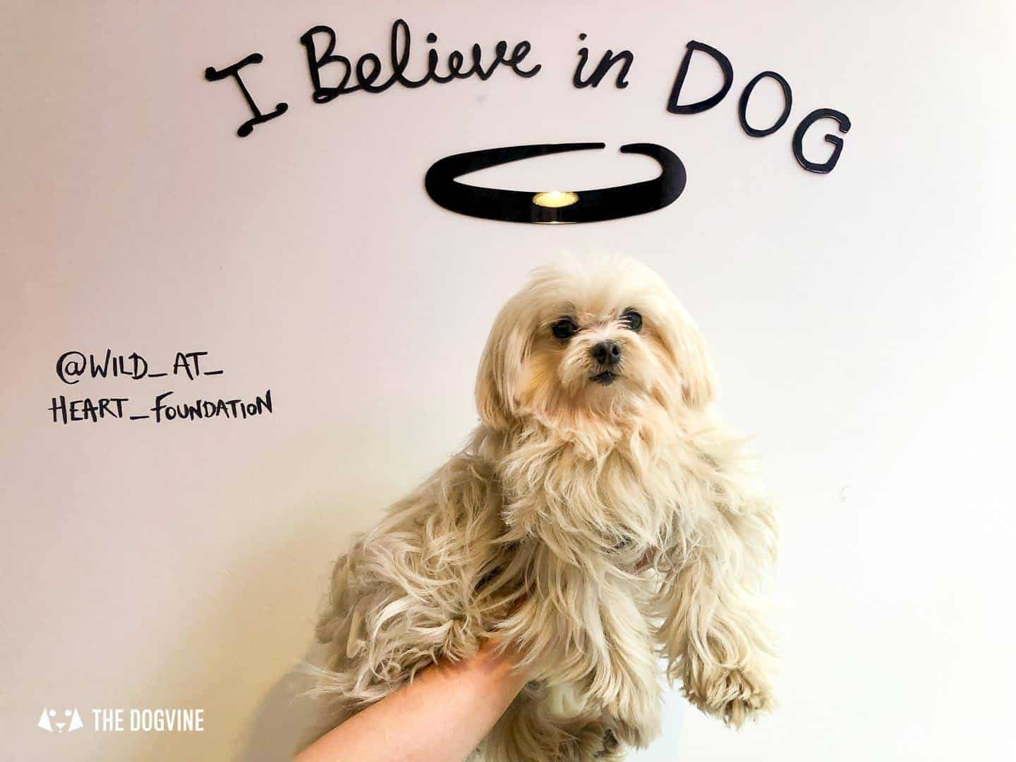 Pup Philanthropy at I Believe In Dog The Pop-up and Lilliput The Maltese