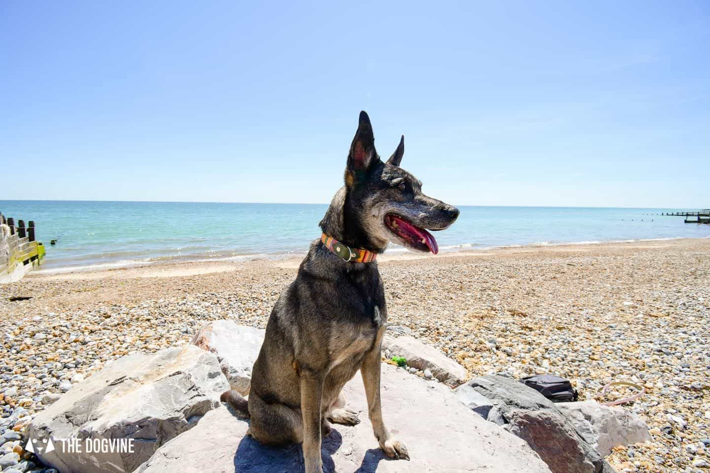 The Best Dog-Friendly Beaches in West Sussex - Climping Beach 2