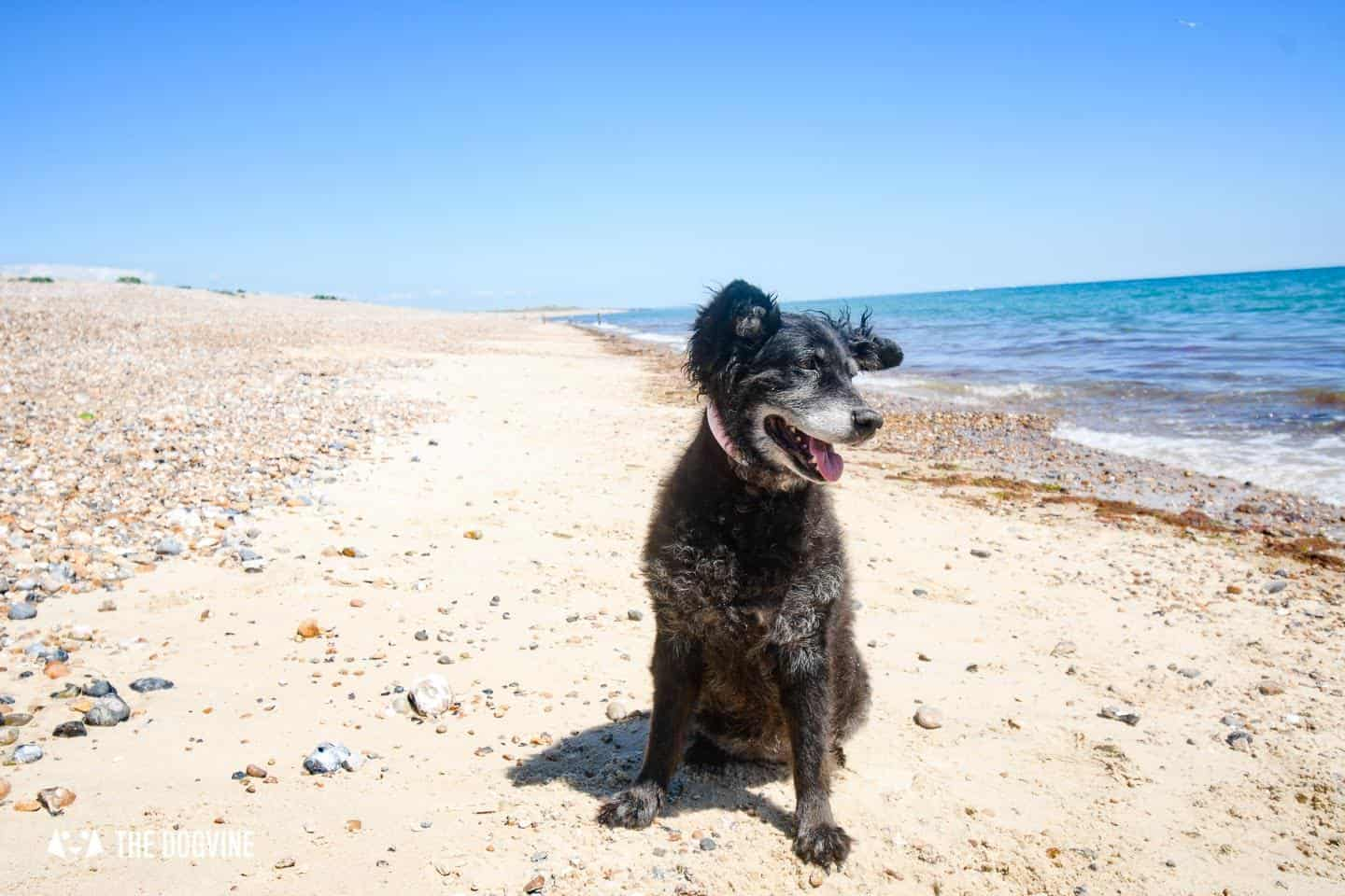 The Best Dog-Friendly Beaches in West Sussex - Climping Beach 4