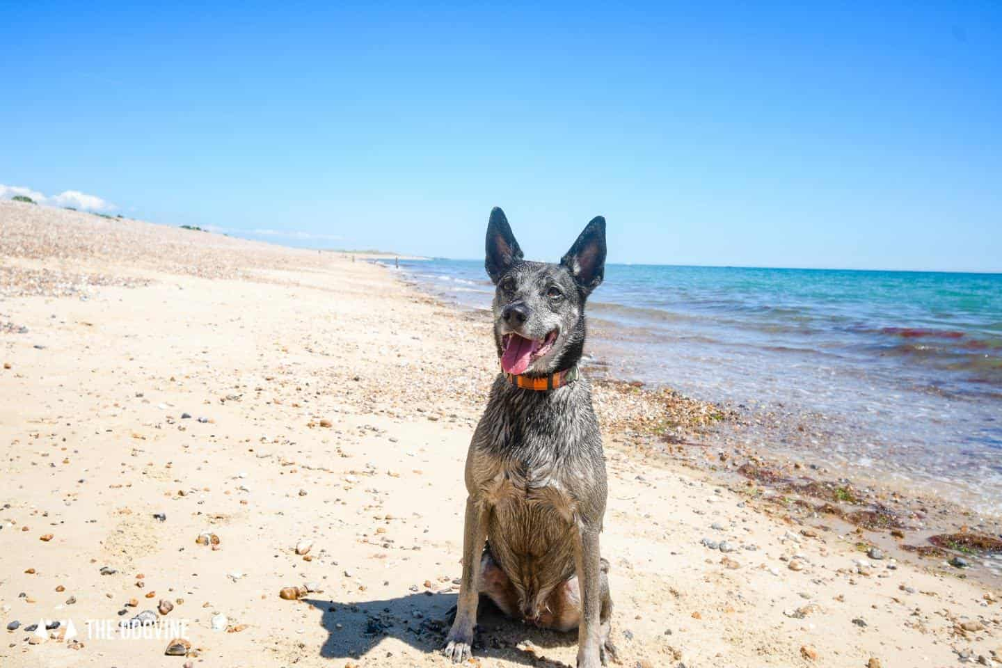 The Best Dog-Friendly Beaches in West Sussex - Dogs on Climping Beach