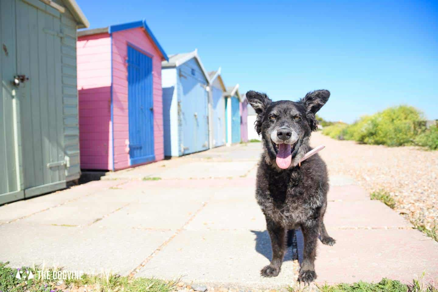 The Best Dog-Friendly Beaches in West Sussex - Ferring Beach Huts