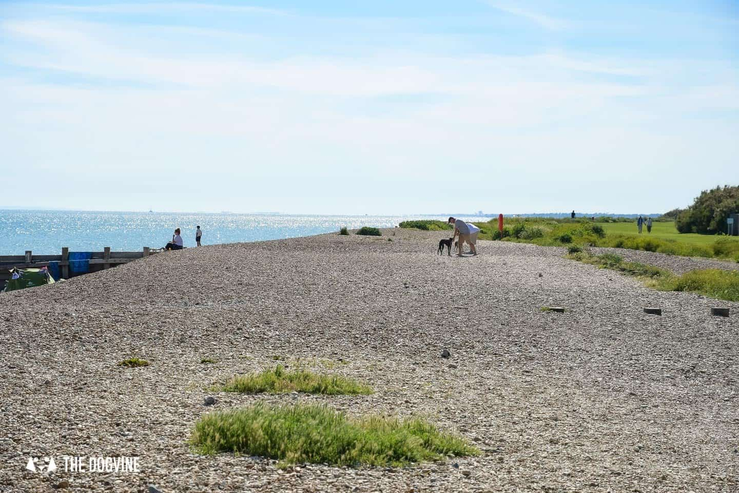 The Best Dog-Friendly Beaches in West Sussex - Ferring Beach