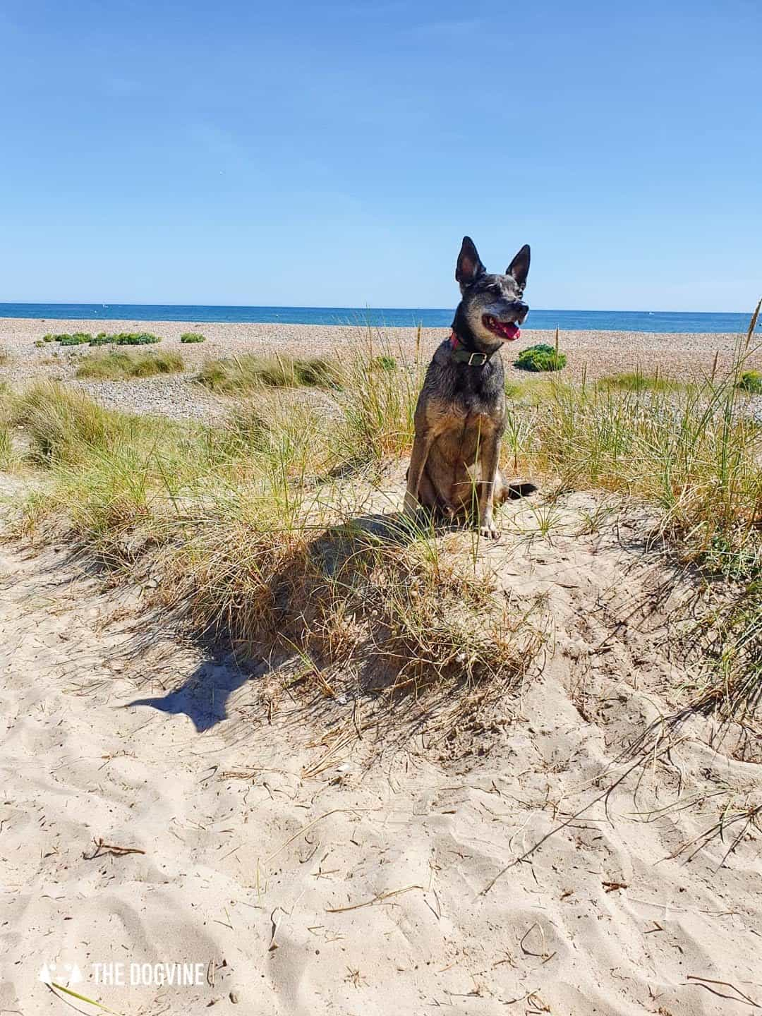 The Best Dog-Friendly Beaches in West Sussex -Littlehampton West Beach 1