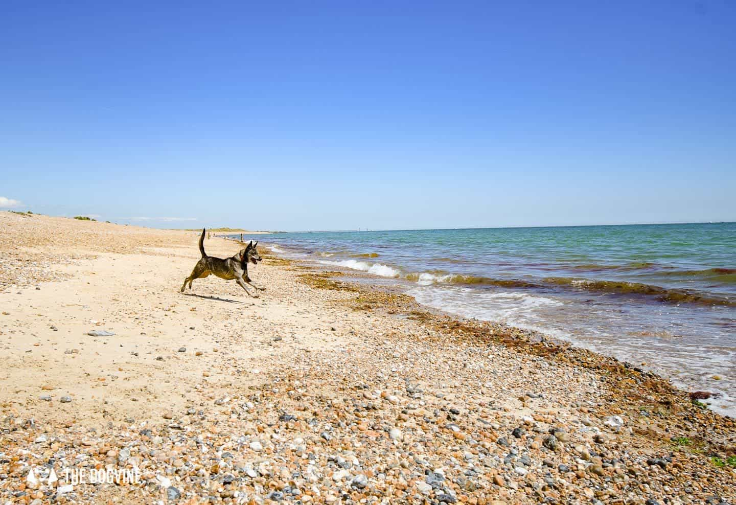 The Best Dog-Friendly Beaches in West Sussex - Moleque on Climping Beach