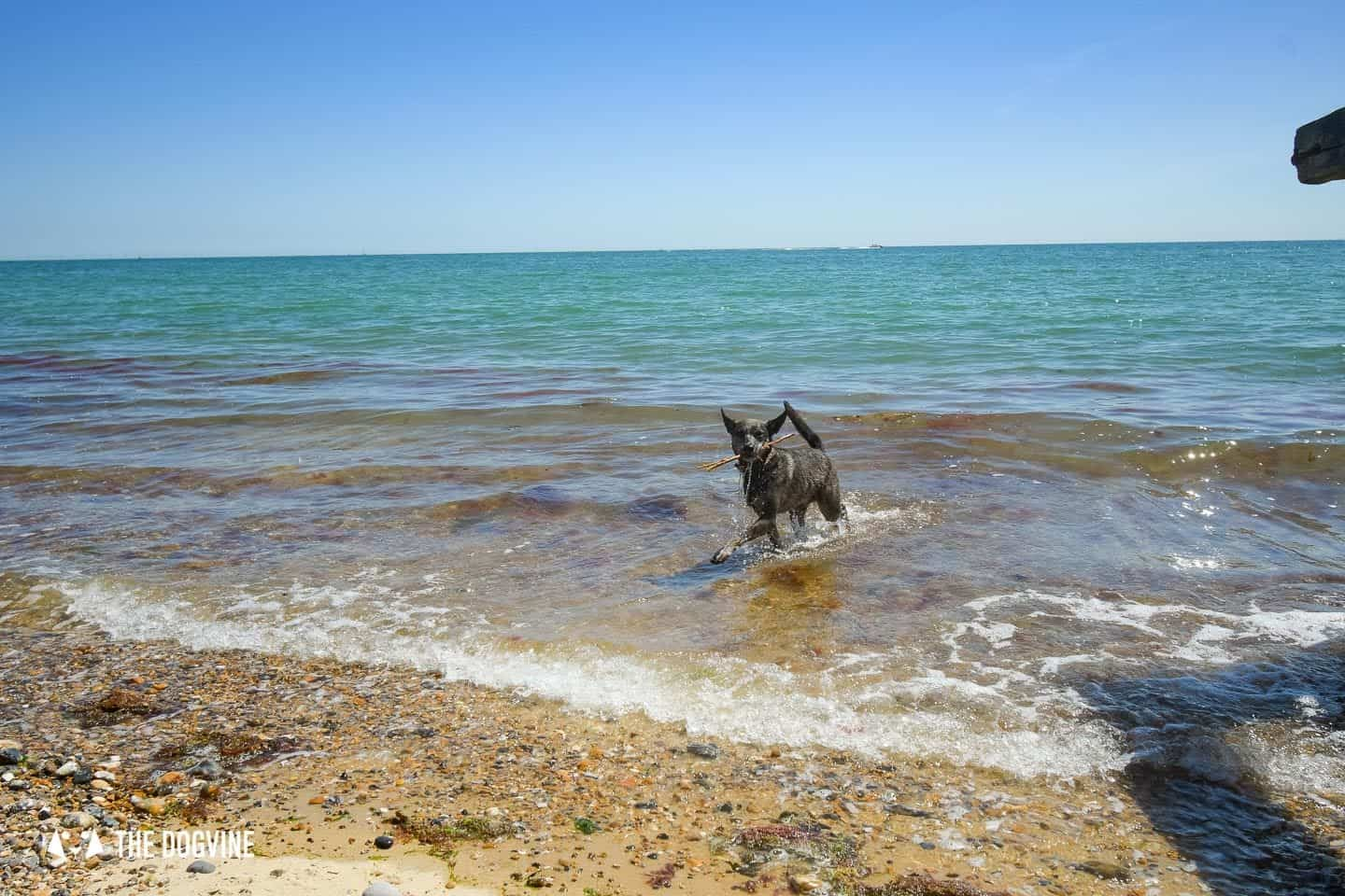 The Best Dog-Friendly Beaches in West Sussex - Moleque on Lancing Beach