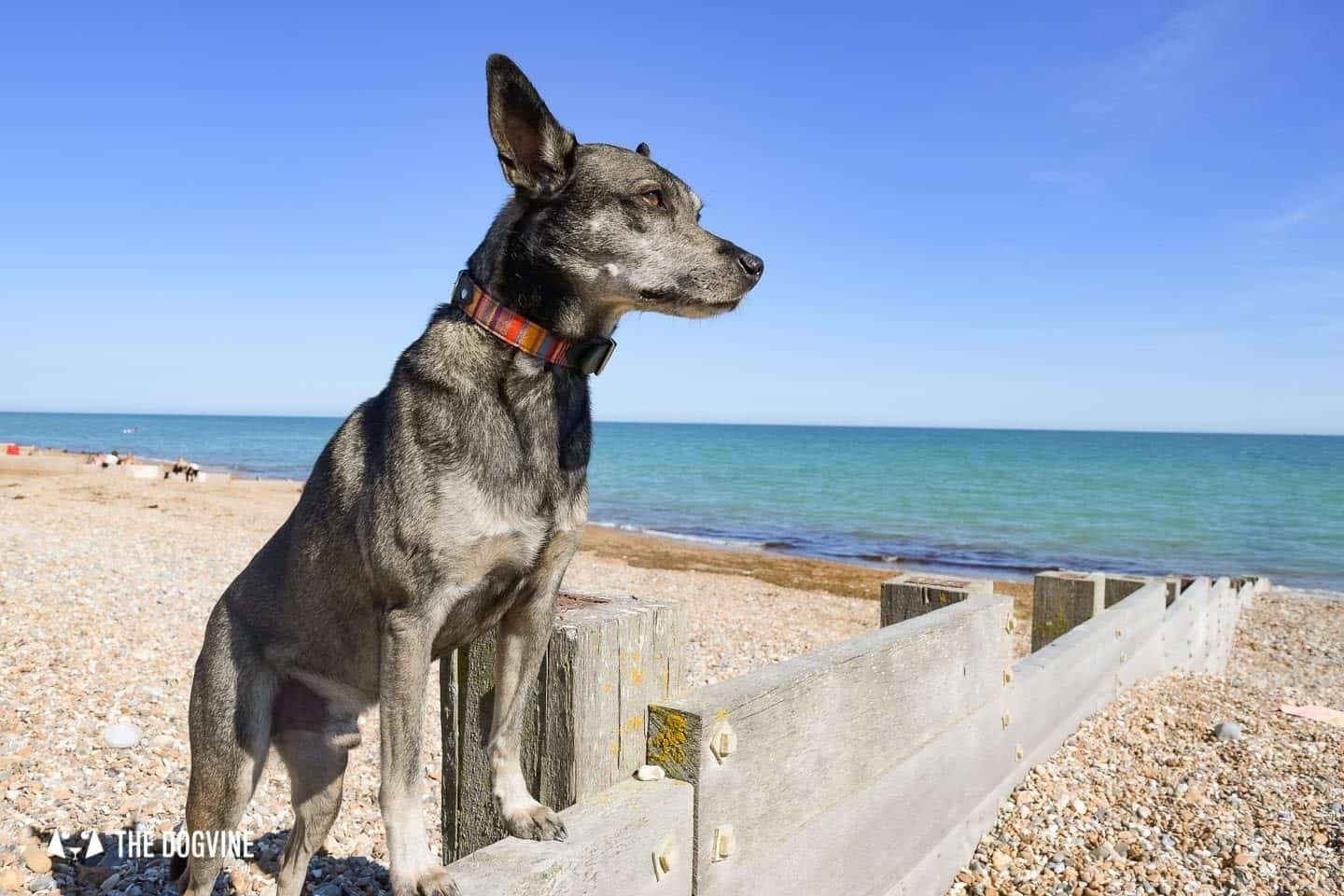 The Best Dog-Friendly Beaches in West Sussex Near London - Moleque on Lancing Beach
