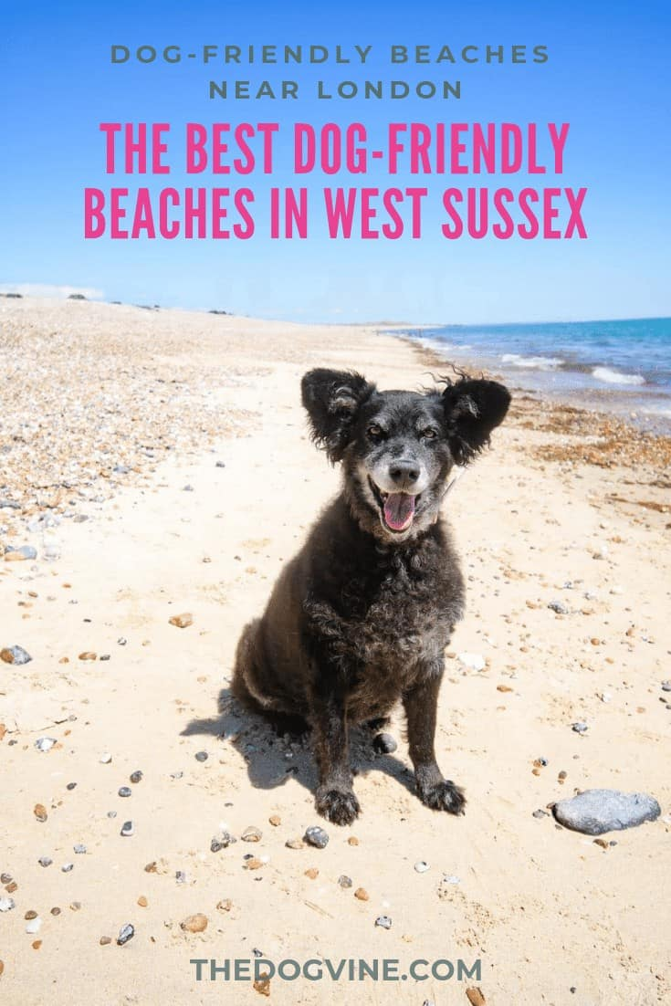 The Best Dog-Friendly Beaches in West Sussex Near London
