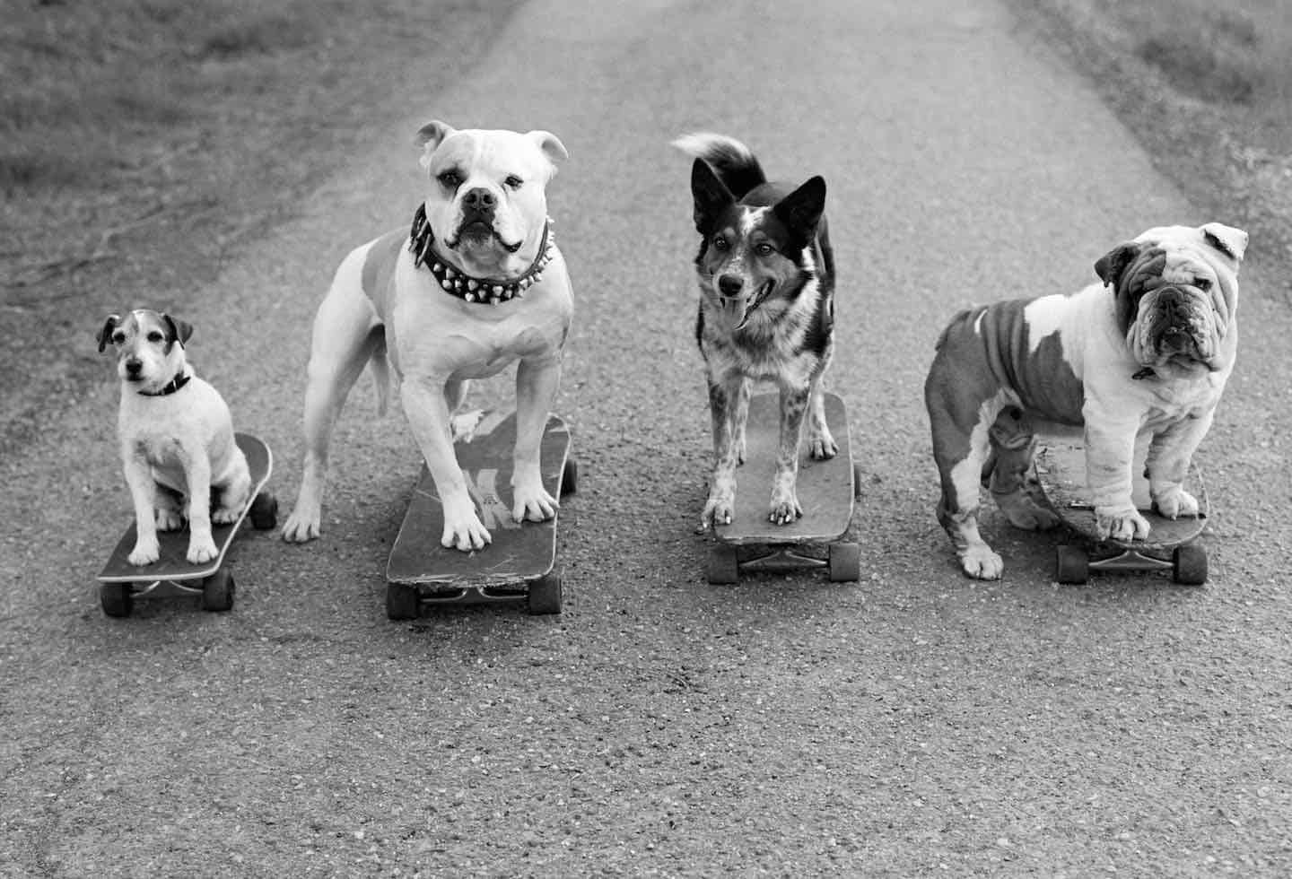 Uggie, Popeye, Jumpy, and Julio, Santa Barbara, CA 2013