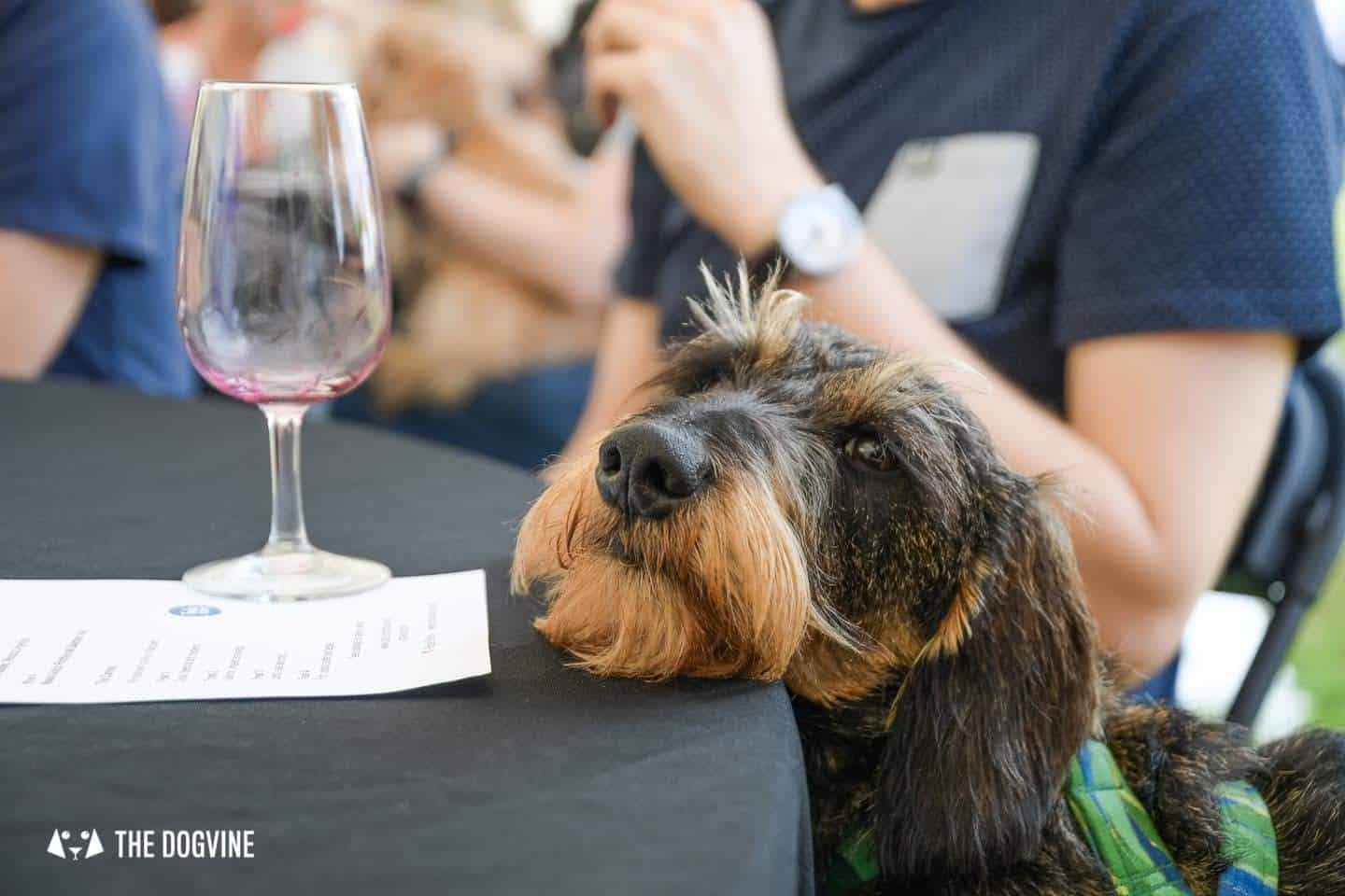 Wine and Canine at Village East Dog-friendly Wine Tasting