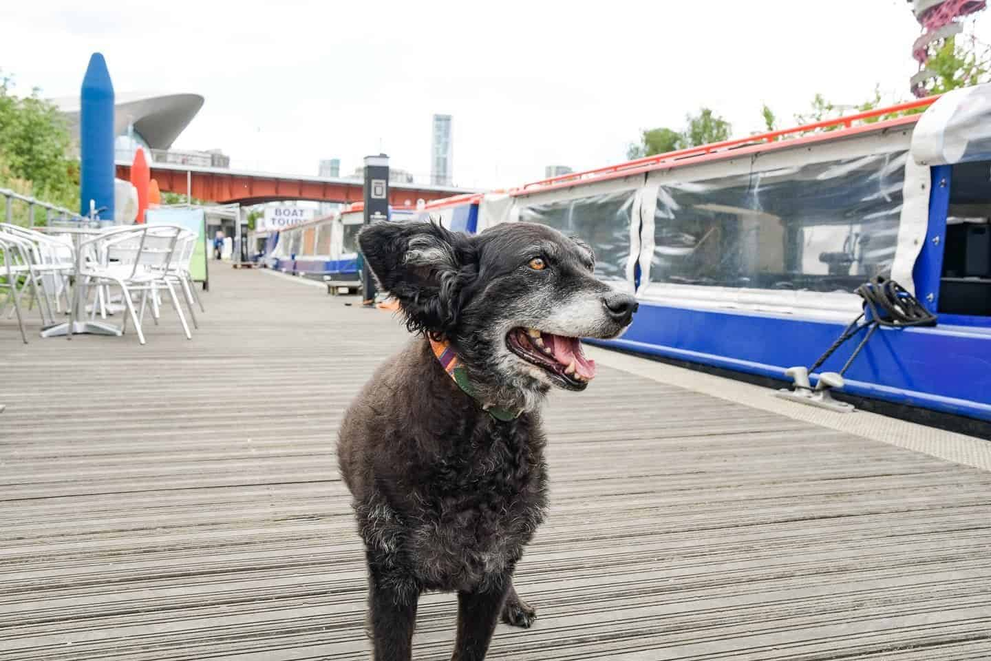 All Aboard For London's Olympic Park Dog-Friendly Boat Tours
