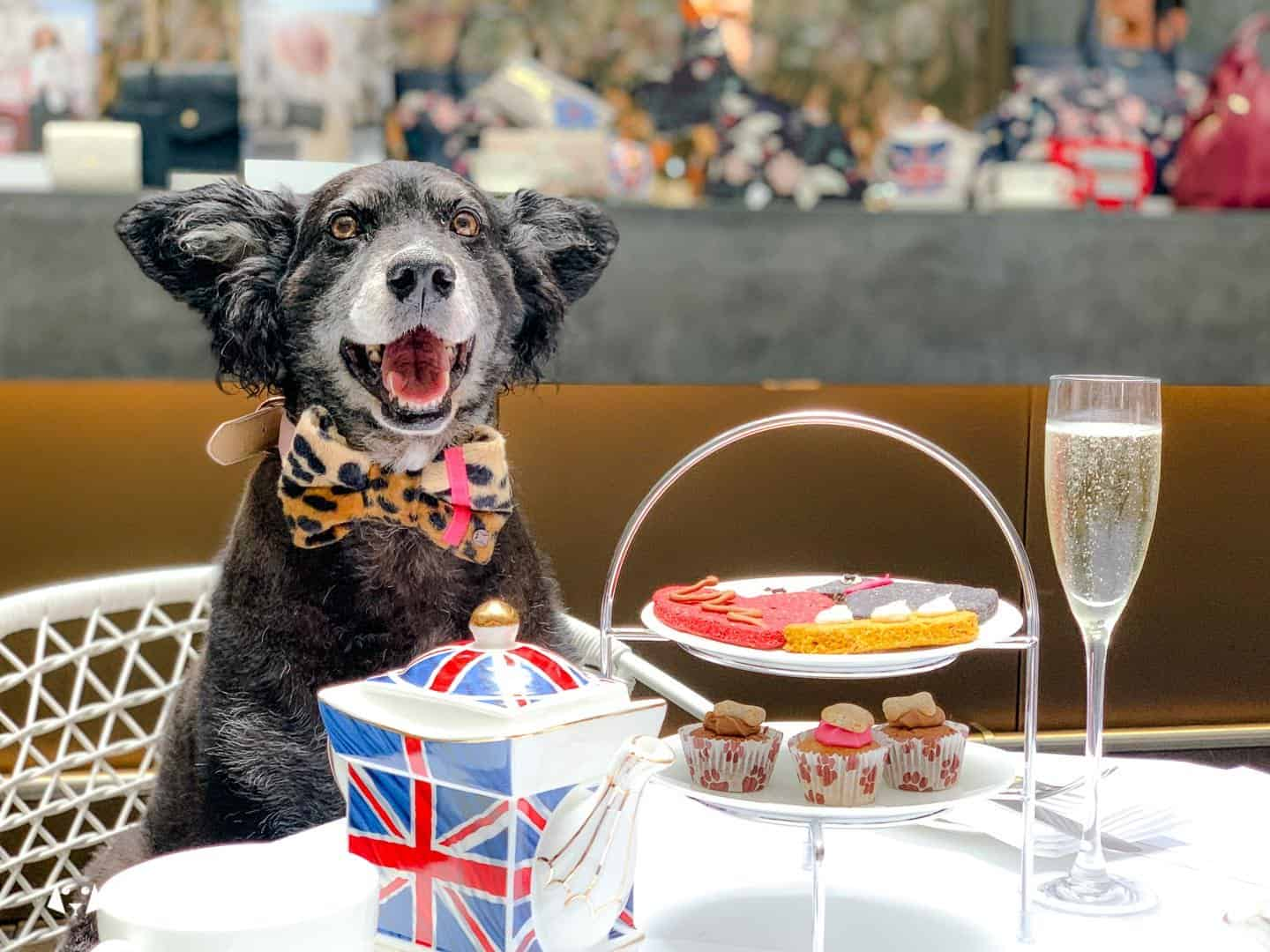Dog-friendly Afternoon Tea Radley x South Place Hotel Belinha Enjoys Posh Pooch High Tea