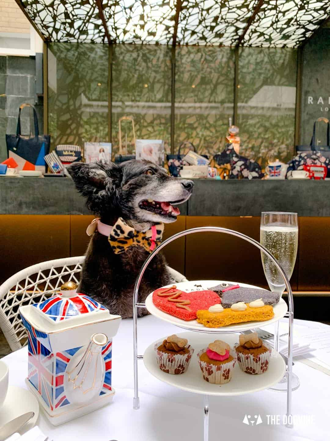 Dog-friendly Afternoon Tea Radley x South Place Hotel Posh Pooch High Tea 16