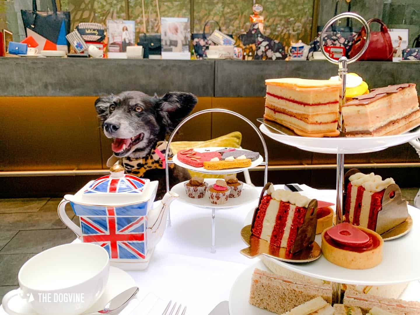Dog-friendly Afternoon Tea Radley x South Place Hotel Posh Pooch High Tea 17