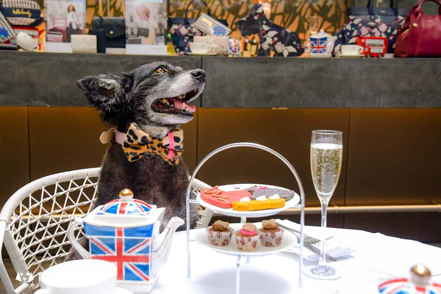 Dog-friendly Afternoon Tea Radley x South Place Hotel Posh Pooch High Tea 2
